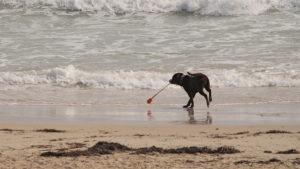 Beach_Dog_58