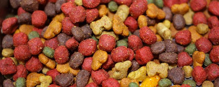 Benefits Feeding Grain Free Dog Food